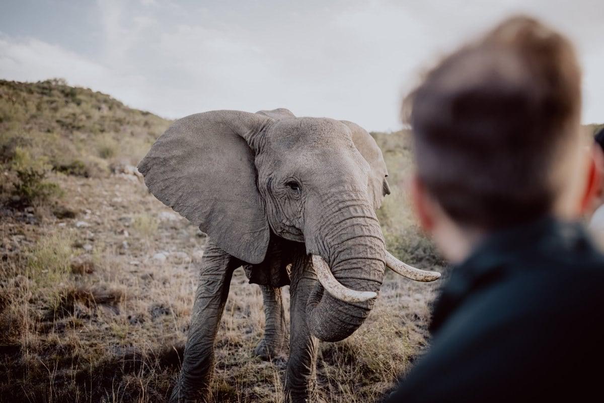 Elefanten Auslandshochzeit Südafrika Safari Hochzeitsfotograf