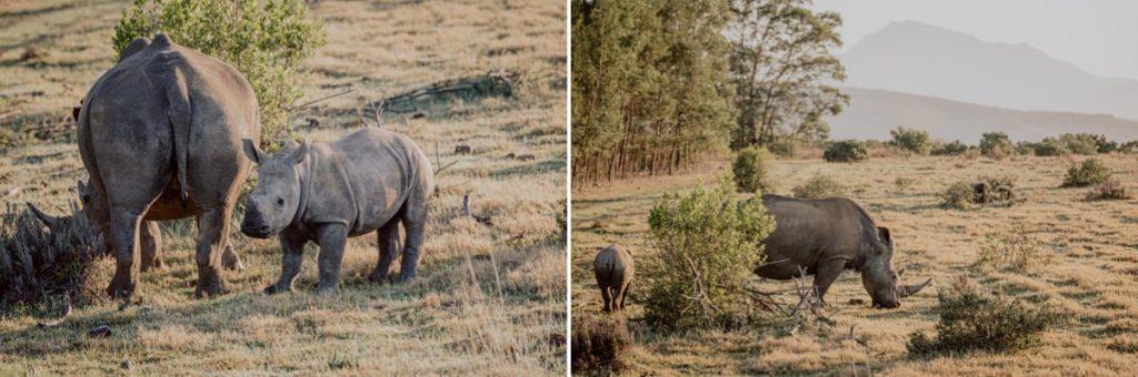 Nashorn Südafrika Safari Gamedrive